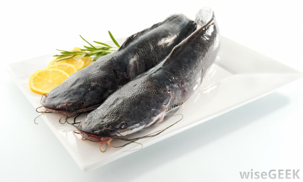 basa-fish-Những Loại Cá Tốt Cho Bé